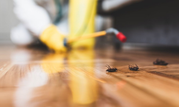 How To Make Sure That The Pest Control Services Are The Best One In Their Aspect?